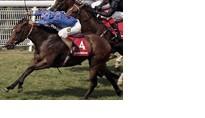 Virtual Horse Racing